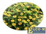 Весы напольные HOME ELEMENT HE-SC908 желтые маргаритки